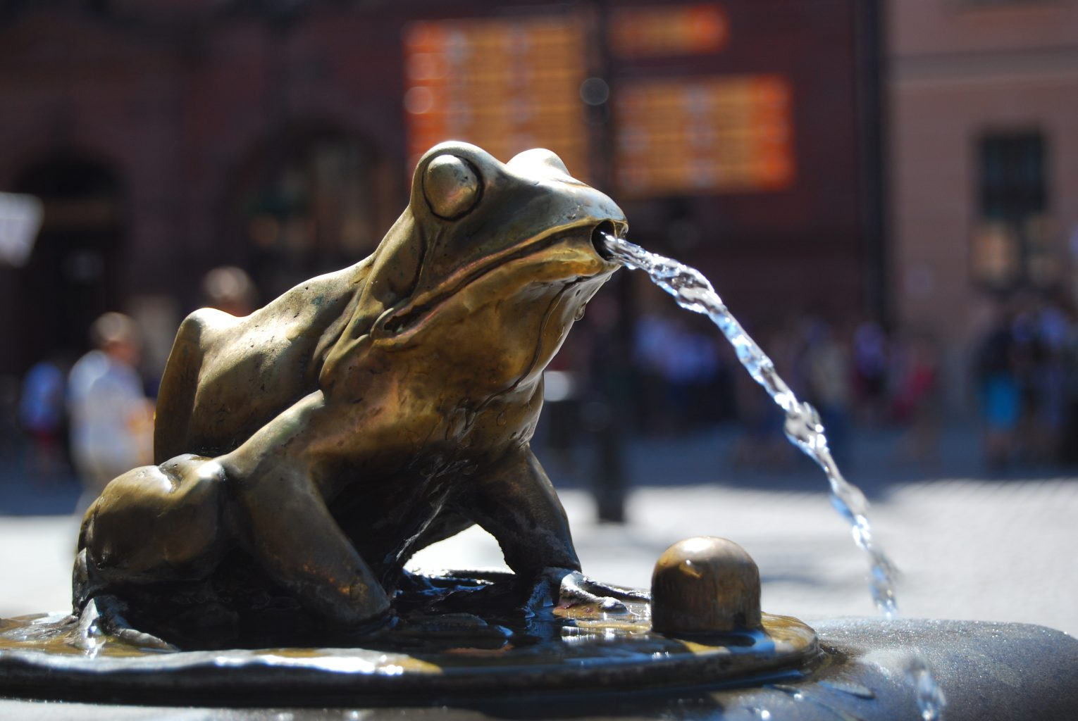 fountain with frog in torun
